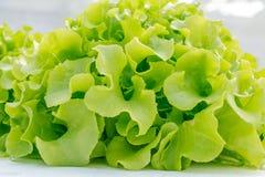 Verse saladegroente Stock Foto's