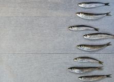 Verse sardine Royalty-vrije Stock Foto's