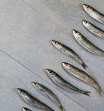 Verse sardine Stock Foto's