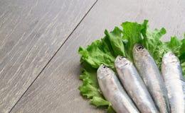 Verse sardine op sla Royalty-vrije Stock Afbeeldingen