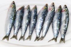Verse sardines Stock Foto