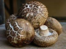Verse shiitakepaddestoelen op houten achtergrond Gezond voedsel maïsmeelpap Royalty-vrije Stock Foto