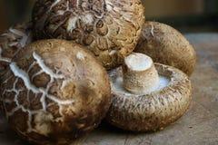 Verse shiitakepaddestoelen op houten achtergrond Gezond voedsel maïsmeelpap Royalty-vrije Stock Afbeelding