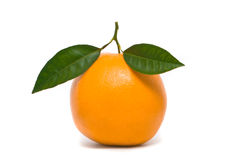 Verse sinaasappel. Stock Foto's