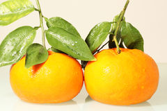 Verse sinaasappel Stock Foto