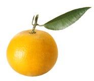 Verse sinaasappel met bladeren Royalty-vrije Stock Fotografie