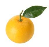 Verse sinaasappel met bladeren Stock Foto