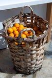 Verse sinaasappelen Stock Afbeeldingen