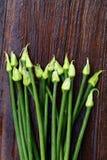 Verse sjalotbloemen Stock Afbeeldingen