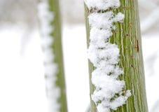 Verse sneeuw op boomboomstam Stock Afbeeldingen