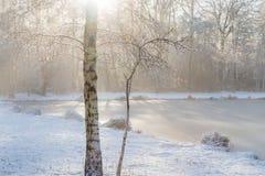 Verse sneeuw op de takjes die van een berk, weg snel in stro smelten Stock Afbeeldingen