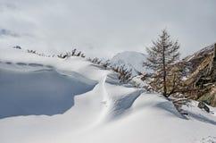 Verse sneeuwdekking in duinen, een de winterlandschap Stock Afbeelding