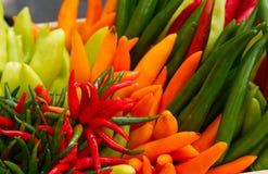 Verse Spaanse peperpeper Stock Afbeeldingen