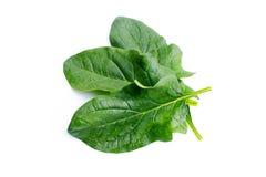 Verse spinazie stock afbeeldingen