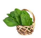 De bladeren van de spinazie Stock Fotografie