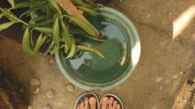 Verse Tak met Lange Bladeren in Uitstekende Groene Plastic Kom Water royalty-vrije stock foto