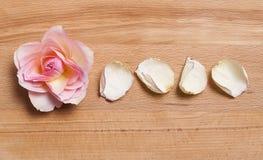 Verse teder nam toe en droog nam bloemblaadjes toe Royalty-vrije Stock Foto's