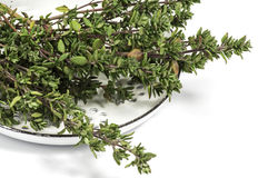 Verse thyme Stock Fotografie