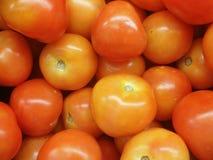 Verse tomaat Royalty-vrije Stock Foto's