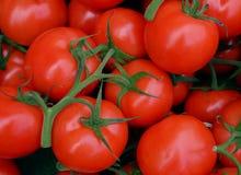 Verse tomaat in de markt Stock Foto
