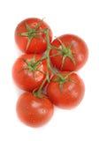 Verse tomaat met dalingen van water Stock Afbeelding