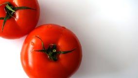 Verse tomaat op wit Stock Fotografie