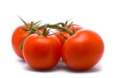 Verse tomaten Stock Afbeeldingen