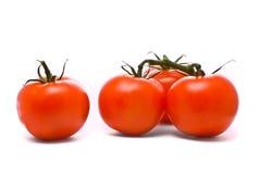 Verse tomaten. Royalty-vrije Stock Foto