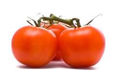 Verse tomaten. Stock Foto's