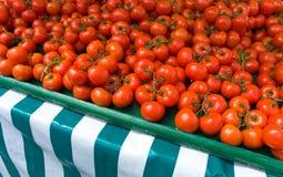 Verse Tomaten Royalty-vrije Stock Afbeeldingen