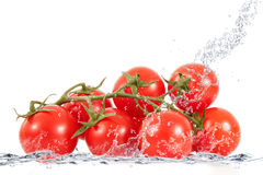 Verse tomaten die in water vallen Royalty-vrije Stock Afbeelding