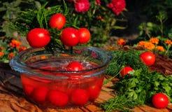 Verse tomaten die in zuiver water vallen Stock Fotografie