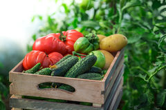 Verse tomaten en komkommers Stock Afbeelding