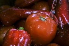 Verse tomaten en paprika met waterplons stock fotografie