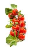 Verse tomaten met groen geïsoleerd blad Royalty-vrije Stock Afbeeldingen