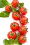 Verse tomaten met groen geïsoleerd blad Royalty-vrije Stock Afbeelding