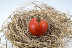 Verse tomaten op stro Stock Afbeeldingen