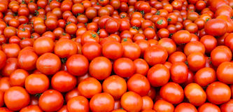 Verse tomaten op vertoning Stock Afbeelding