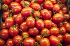 Verse tomaten Rode tomaten De organische tomaten van de dorpsmarkt Kwalitatieve achtergrond van tomaten Stock Afbeelding