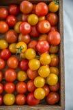 Verse tomaten Rode tomaten Royalty-vrije Stock Fotografie