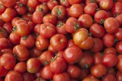 Verse tomaten Rode tomaten De organische tomaten van de dorpsmarkt Kwalitatieve achtergrond van tomaten Royalty-vrije Stock Afbeelding