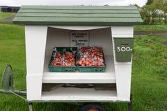 Verse tomaten voor Ijslandse Kroon 300 Royalty-vrije Stock Foto