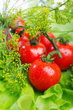 Verse tomatenclose-up Stock Afbeeldingen