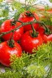 Verse tomatenclose-up Royalty-vrije Stock Foto's