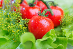 Verse tomatenclose-up Royalty-vrije Stock Foto