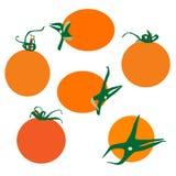Verse tomatenvector Stock Foto's