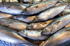 Verse tonijn bij de vissenmarkt Stock Afbeelding