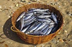 Verse tonijn in een mand Royalty-vrije Stock Fotografie