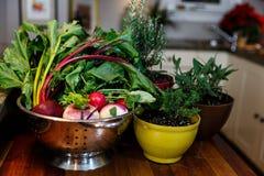 Verse tuingroenten in een zilveren vergiet naast kruiden die in kleurrijke potten groeien Stock Foto