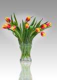 Verse tulpen Royalty-vrije Stock Foto's